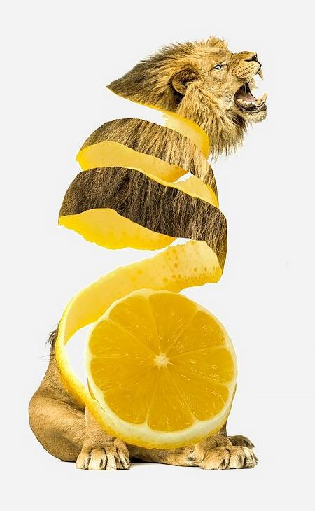 ترکیب جالب میوه ها با حیوانات