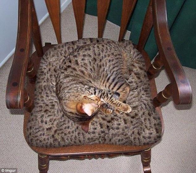 استتار جالب حیوانات در بین اشیای خانه