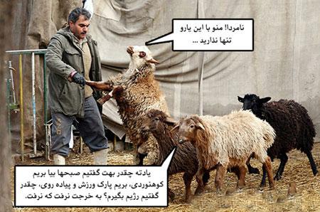 تصاویر طنز قبل از قربانی کردن گوسفندان