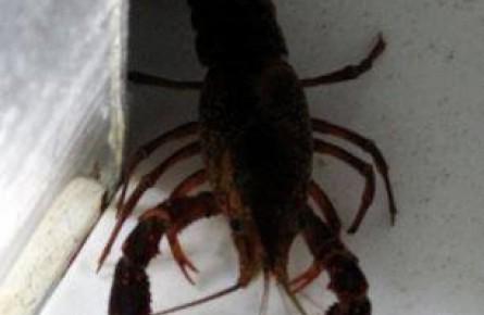 درمان استرس با خرچنگ