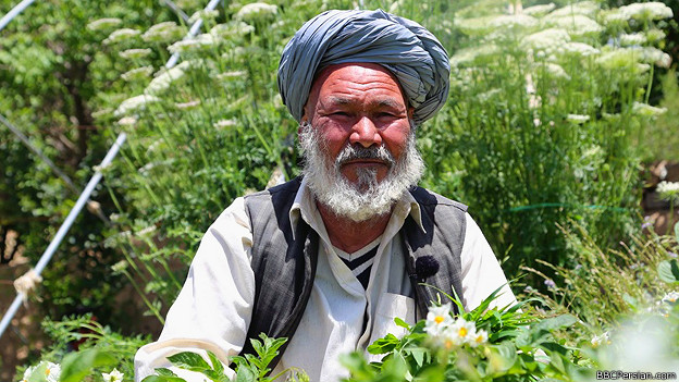 آشنایی با لیلی و مجنون افغانی
