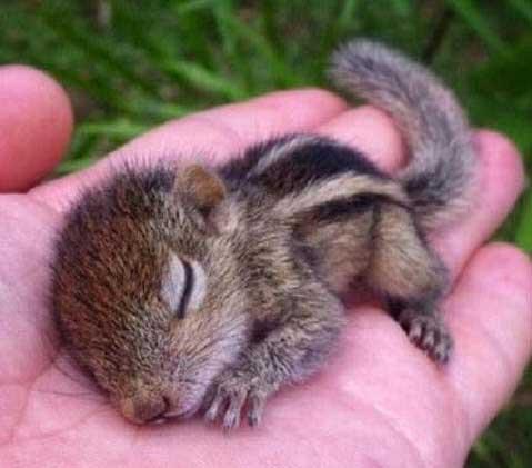 سنجابی که به دست انسان از مرگ نجات یافت