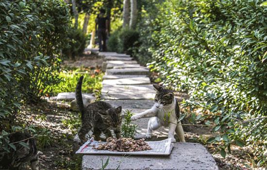 این زوج مهربان ایرانی عاشق گربه هان