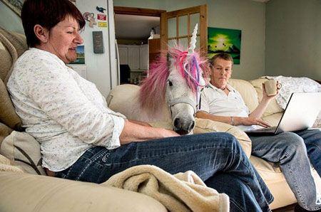 عکس های زیباترین اسب دنیا