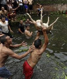 فستیوال منزجر کننده زجرکش کردن حیوانات