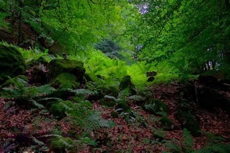 عکس های رویایی از جنگل هلی دار در قلب سواد کوه