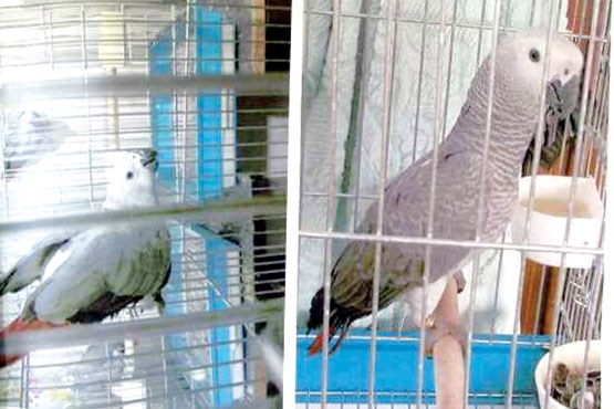 اعتراف دختر به سرقت پرنده برای سگ بیمار