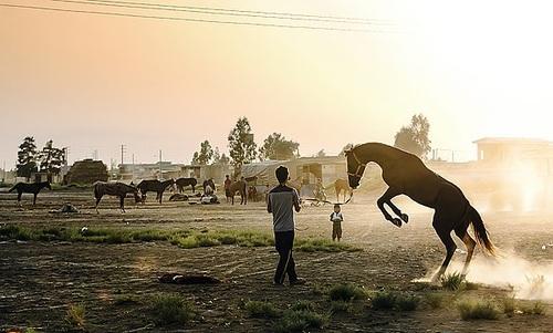 تصاویر  فیلم موفق و دلنشین آتلان در جغرافیایی خاص