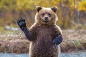 تصویر مرگ دردناک خرس قهوه ای روی ریل قطار در شمال