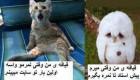 عکسهای خنده دار و باحال سری شهریور 94
