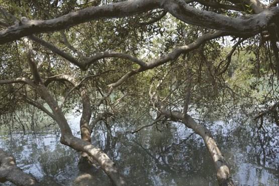 آشنایی با  راز های عجیب جنگل حرا در قشم