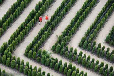 آشنایی با باغ های زیبای ماز + عکس