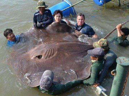 تصاویر جالب از بزرگترین اجسام دنیا