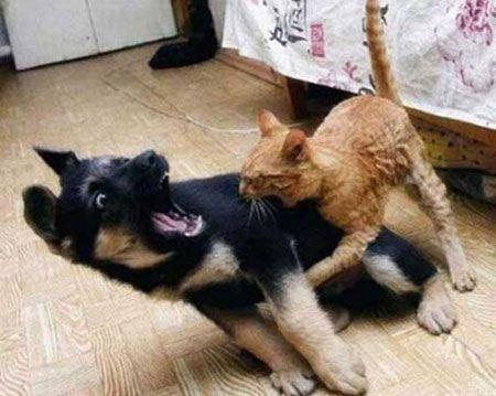 عکس های خنده دار از حیوانات