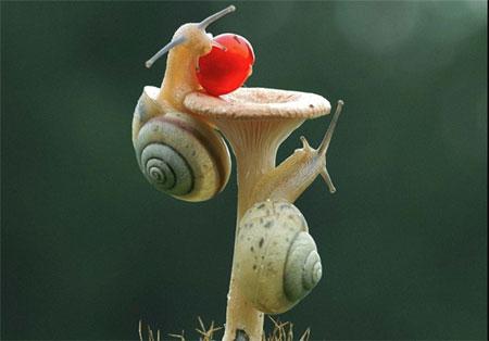 وقتی حلزون ها با هم مسابقه میدن