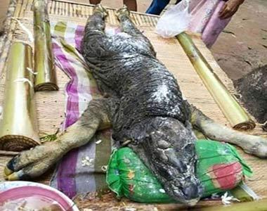 صید موجودی عجیب و وحشتناک در تایلند ! + تصاویر