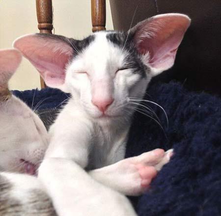 تصاویر گربه ی عجیبی که شبیه جن معروف است