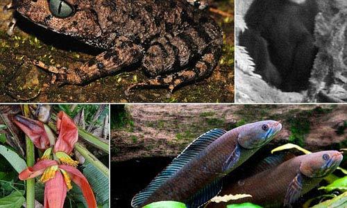 کشف ماهی پا دار و میمون عطسه کن! +تصاویر