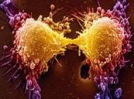 کشف تصادفی راه درمان سرطان