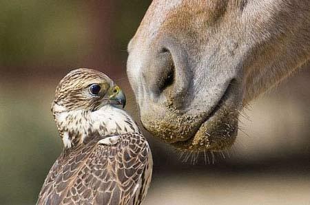 تصاویر خنده دار و بامزه از حیوانات