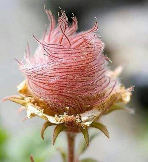 عجیبترین و نایاب ترین گل رز دنیا که تابحال ندیده اید + عکس