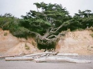 درخت  عجیبی که بین زمین و آسمان معلق است +عکس