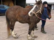ظاهر عجیب اسبِ این شخص بی رحم + عکس