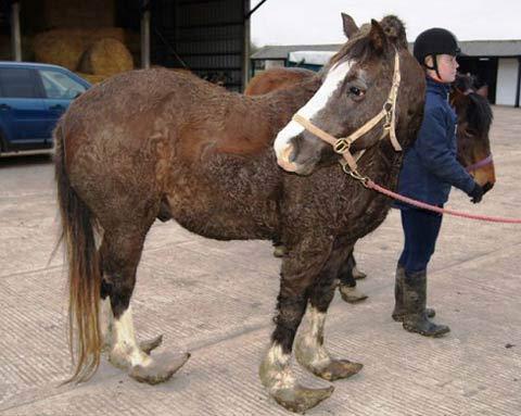 ظاهر عجیب اسبِ این شخص بی رحم   عکس