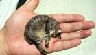 کوچکترین گربه دنیا را ببینید + عکس