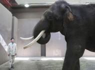 فیلی که میتواند حرف بزند دانشمندان را حیرتزده کرد + عکس