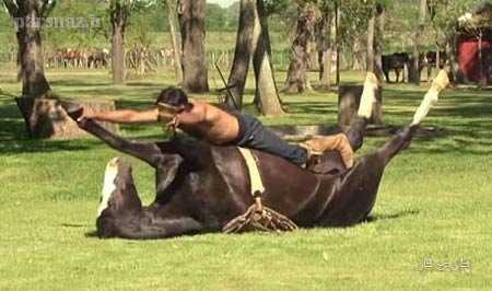 افزایش تکاندهنده آمار تجاوز جنسی به اسب