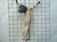 داعش یک گربه را اعدام کرد +عکس