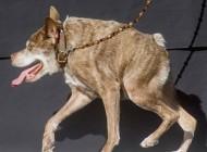 وحشتناک ترین سگ دنیا را ببینید + عکس