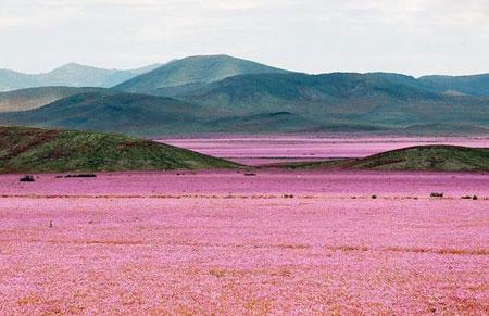زیباترین عکس های منظره طبیعت که تابحال ندیده اید