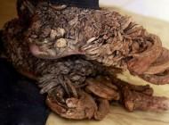مرد درختی اندونزی در حسرت داشتن همسر فوت کرد+عکس