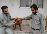ضارب جنجالی سگ شکاری بازداشت شد +عکس
