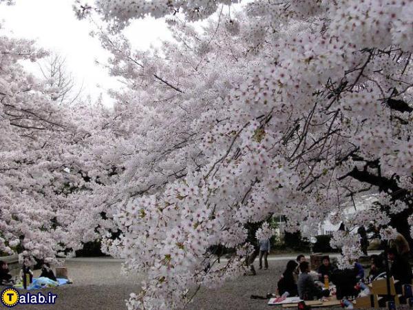عکسهای دیدنی از شکوفه های بهاری