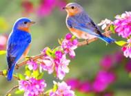 شعرهای زیبا برای عید نوروز و بهار