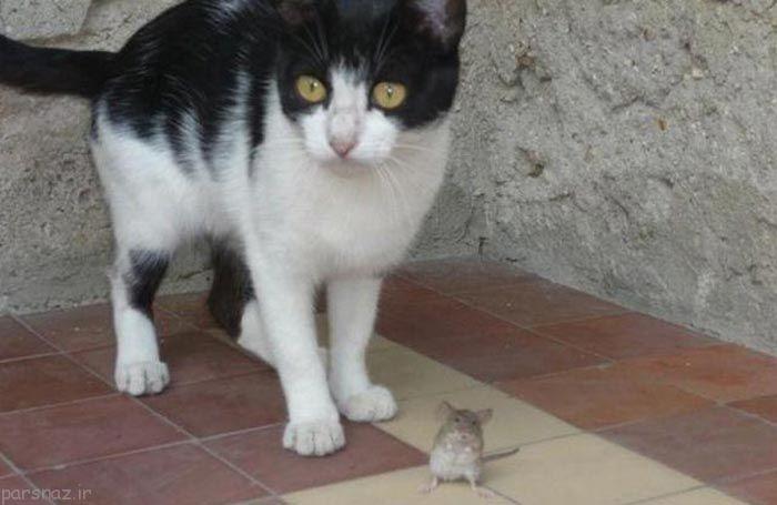 عکس های خنده دار از دوستی گربه و سگ و موش