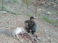 گوزن باردار در خرم آباد تلف شد + عکس