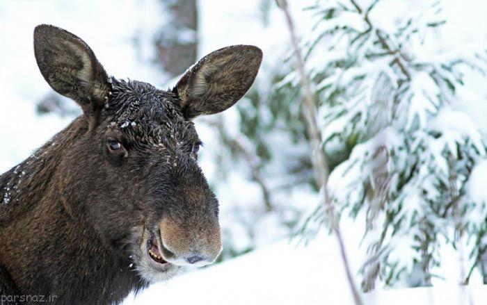 مجموعه ای از عکس های خنده دار از حیوانات