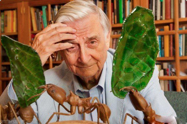 چه  درس هایی از مورچه ها میتوان آموخت