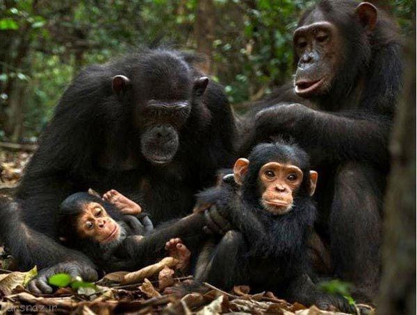 باهوش ترین موجودات زمین این حیوان ها هستند