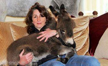 این خانم عجیب با حیوانات زندگی می کند