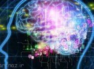 غذایی که مغز را گرسنه می کند