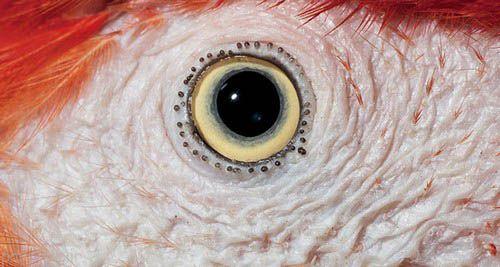 عکس های دیدنی از چشم های حیوانات حیات وحش