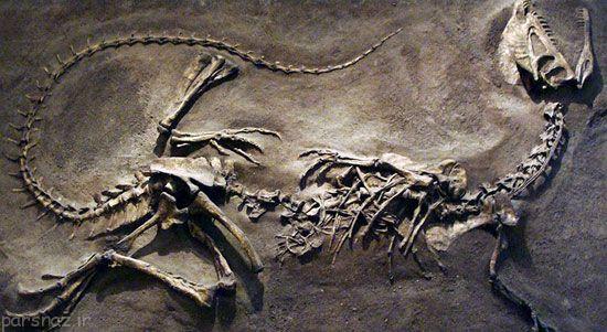 آشنایی با معروف ترین دایناسورها : دایلوفوساروس