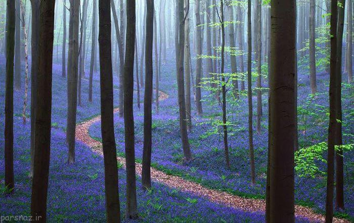 تصاویری از جنگل های ناشناخته و مرموز جهان