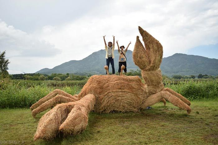 جشن شالیزار کاران ژاپنی در برداشت برنج