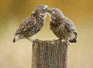 انواع مختلف بوسیدن در روابط عاشقانه با همسر